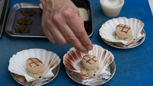 foto 3 coquille